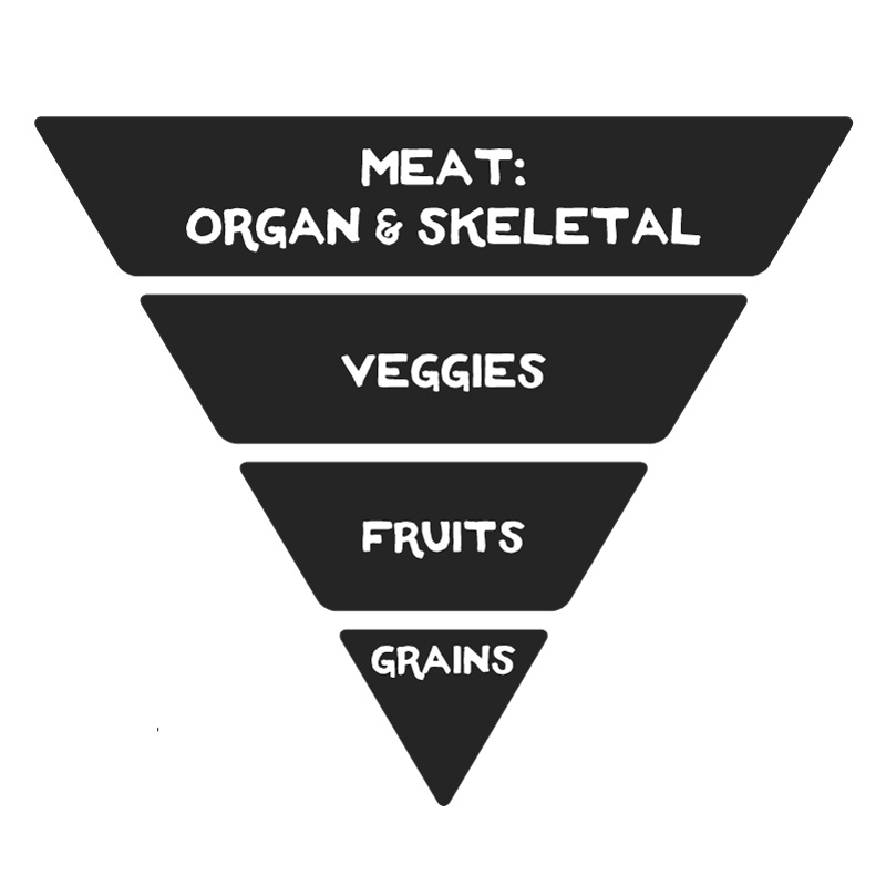 Dog Food Pyramid: primarily meat (organ & skeletal), some veggies, some fruits, little to no grains