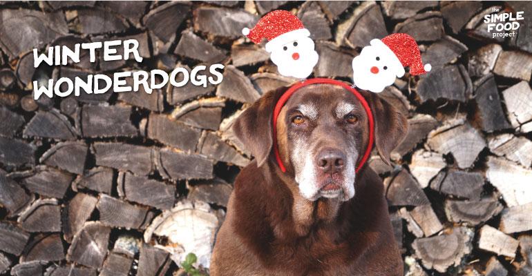Winter Wonderdogs