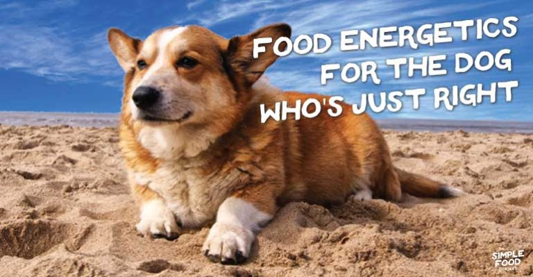 food energetics for the dog who's just right