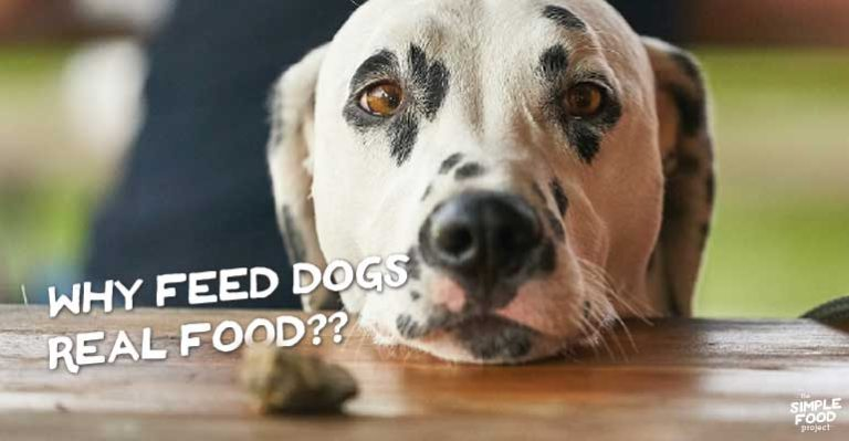 why feed dogs real food?