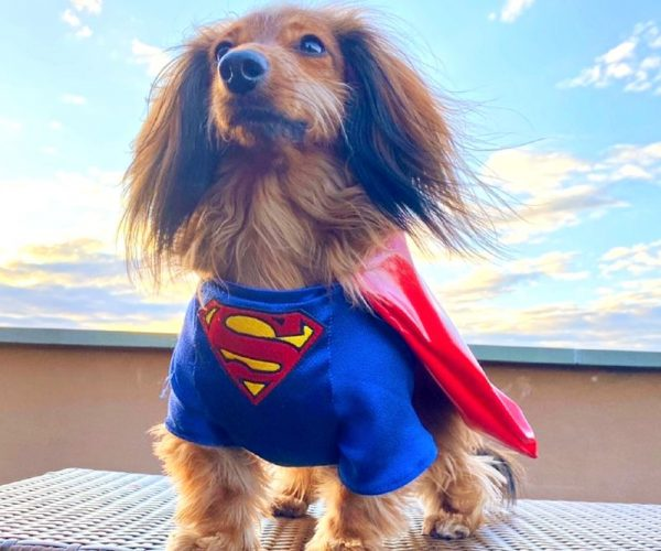 LongboyLincoln_Superman